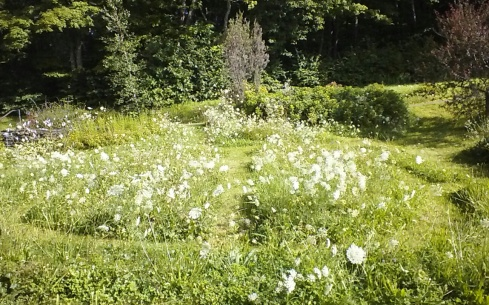 my lawn 2013